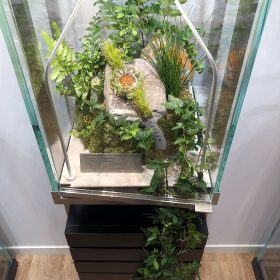 H. Moser & Cie. Nature Watch between plants in a showcase